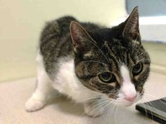 www.PetHarbor.com pet:NWYK1.A1018946