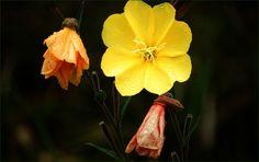 Blüten mit Regentropfen - Jahreszeiten - Galerie - Community