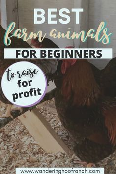 What are the best farm animals to raise for beginner homesteaders to make a profit? In this post I share with you the animals that you have to consider having on your homestead as a beginner. Raising Rabbits For Meat, Raising Farm Animals, Raising Ducks, Raising Backyard Chickens, How To Buy Land, How To Make Money, Backyard Ducks, Farm Kids, Farm Business