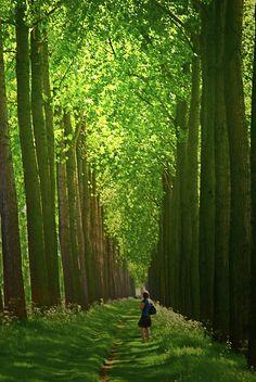 In May, along the Damme Waterway (Damse Vaart), near Bruges   #belgium