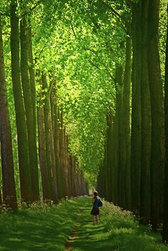 Bruges forest in May, Belgium