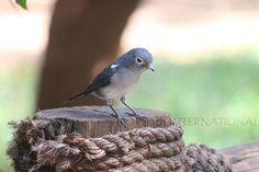 Kenyan wildlife: a little birdie