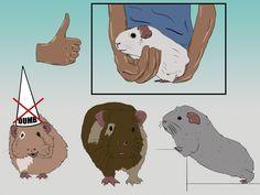 guinea pig training :D