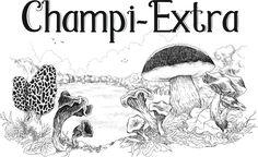 Champi-Extra