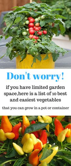 10 Vegetables You Can Grow In Containers