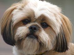 Veja as dez raças de cães mais queridas do Brasil  http://entretenimento.r7.com/bichos/fotos/conheca-os-dez-caes-mais-criados-no-pais-20120704-3.html#