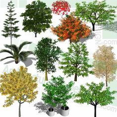 A collection of Various colorful trees as SketchUp 3D models. Free download! Sketchup Model, Playground Design, Landscape Architecture Design, Parking Design, Colorful Trees, Landscaping Plants, Trees And Shrubs, Planting Flowers, 2d