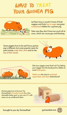 July 16th is Guinea Pig Appreciation Day! Here a few ideas on how to treat your piggies on this day!