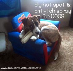 DIY Hot spot ITCH spray for dogs.