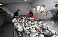 Αποτέλεσμα εικόνας για εγκαταστάσεις μεταποίησης αλιευμάτων Fish, Meat, Pisces