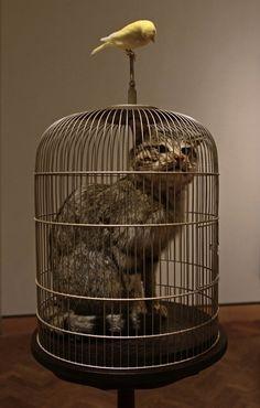 "Catt"", 2010 By- EVA AND FRANCO MATTES"