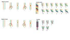BRANSOLETKA Z MULINY. Rysunek schematyczny wykonania węzłów w prawo i w lewo oraz bransoletki w ukośne pasy i jodełkę. Friendship Bracelets, Origami, Jewerly, Beauty Hacks, Projects To Try, Beads, Diy, Lgbt, Vsco
