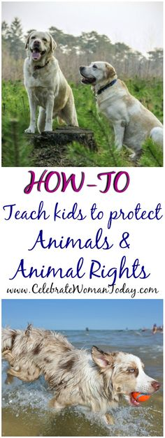 HOW-TO Teach Children To Protect Animals And Animal Rights #HeartThis