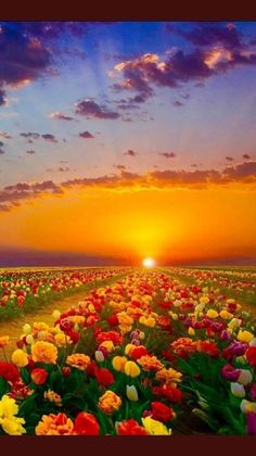 Coucher de soleil - New Tutorial and Ideas Beautiful World, Beautiful Gardens, Beautiful Places, Beautiful Flowers, Nature Pictures, Cool Pictures, Beautiful Pictures, Landscape Photography, Nature Photography