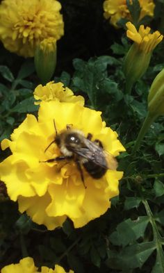 Silver Lake, Insects, Bee, Animals, Honey Bees, Animales, Animaux, Bees, Animal