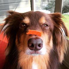 Carrot trick