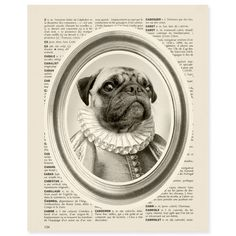 Pug in Courtier Clothing Print by Noemie Audoyer @ French Gallery Mr Cat, Kitty Cats, Courtier, Sailor Outfits, Pug Art, Pug Pictures, Cat Costumes, Pug Love, All Dogs