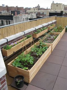 large versions of these raised gardens on city roof tops could not only increase sustainability but also decrease pollution