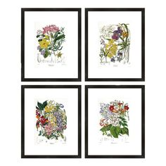 Botanical Framed Prints #birchlane