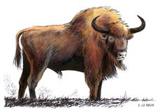 Bison des steppes