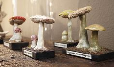 toadstools (they just naturally go with gnomes)