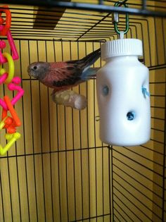 Pet Bird DIY Ideas... DIY Parakeet foraging toy, any size pill bottle without the label. Drill good sizes holes (big enough for your bird to get his beak into them) then fill with a bird safe paper or bird snacks.
