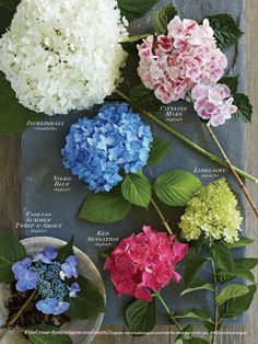 Hydrangeas are the best flowers to use for your next Summer party!