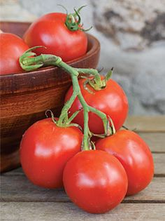 Stupice is a German heirloom variety that grows well in containers. It delivers super early tomatoes that are two to three inches in diameter.The 10 Best Tomatoes for Containers | Veggie Gardener