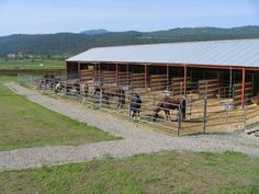 One of a kind Northeast Washington horse ranch! World class facility is complete with a 70x200 indoor arena, 200x300 outdoor arena, 3 round pens, horse barn, hay barn, many paddocks and stalls, an extreme trail riding course and much, much, more! This is a turn key horse training and boarding facility kept in immaculate condition. Currently the home of Mountain House Stables, this horse ranch is ready to go for any breeding or training program. #WAHorseRanchForSale