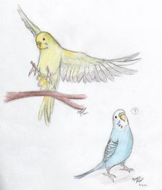 Parakeets by on DeviantArt - Use flying parakeet, below each rib side, colored ink like piper and mission - Parrot Drawing, Fly Drawing, Bird Drawings, Animal Drawings, Cool Drawings, Animal Sketches, Art Sketches, Art And Illustration, Budgies