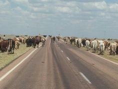 Droving outside Barcaldine QLD
