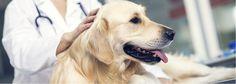 AUV: El servicio de urgencias veterinarias al alcance de todos