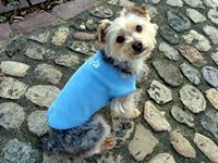 Talking Tails - Easy Dog Fleece Jackets - How to Make a Dog Fleece Jacket