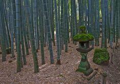 Floresta de Bambu japonês 4