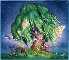 willow tree - Google Search