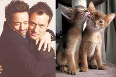 Robert Downey Jr. y Jude Law contra un gato y un gato | 31 famosos sexies contra gatos