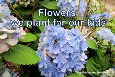 Gardening with kids and the flowers we plant by theeducatorsspinonit: We plant flowers for:  Big beautiful bouquets To teach about seed collecting  For the kids to pick and arrange and For the wildlife. (The rule in our house is that if you ask first, then you can pick it.) #Gardens #Flowers #Kids