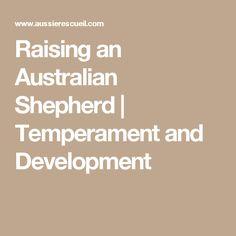 Raising an Australian Shepherd | Temperament and Development
