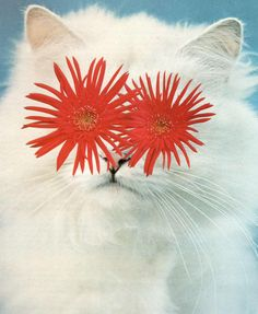 A collage of a cat with asters for eyes by Stephen Eichhorn. From 'Cats & Plants. (He uses photos found in books.