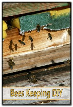 Once you have purchased a hive it can be maintained in a remote edge of your garden it is not unusual to see some country residences with a hive. Starting A Beehive, Bee Pictures, Honey Bees, Bee Keeping, Spring Time, Remote, Lawn, Tips, Nature