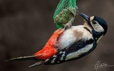 Pure Sailing - Pure Sailing (woodpecker)