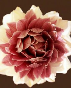 Glamelia Bouquet Cinnamon + Cream Cymbidium Orchids