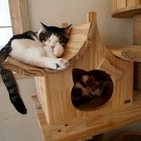 Cat lofts - obviously a must have for any future home I have