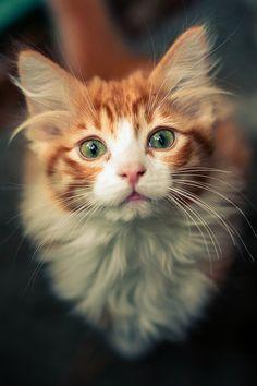 What a beautiful Kitten!.