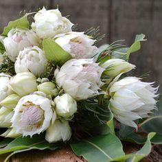 "Serruria ""Blushing Bride"" flower - beautiful for bridal bouquets #whitewedding #vintagewedding #rusticwedding"