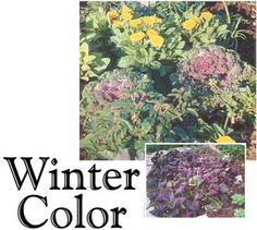 Winter Gardening Tips Trom The Texas Gardener