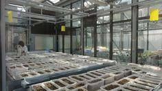 Αναποτελεσματικά και επικίνδυνα τα παράνομα φυτοφάρμακα