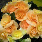 Planting Flowers, Garden, Plants, Decor, Balcony, Garten, Decoration, Lawn And Garden, Gardens