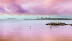 Oystercatchers over still waters.  Te Atatu Peninsula. Auckland, New Zealand.  www.zarirmadon.com