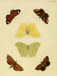Before his death in 1702, William Charlton delivered a  butterfly that looked similar to the English brimstone (Gonepteryx rhamni), with the exception of a smattering of blue speckles. Linnaeus studied the specimen, christened it Papilio ecclipsis, and included it in the 12th edition of his Systema Naturae. It was another three decades before John Christian Fabricius realized that the butterfly was a fake -- a doctored version of that common brimstone butterfly, artfully splashed with paint.